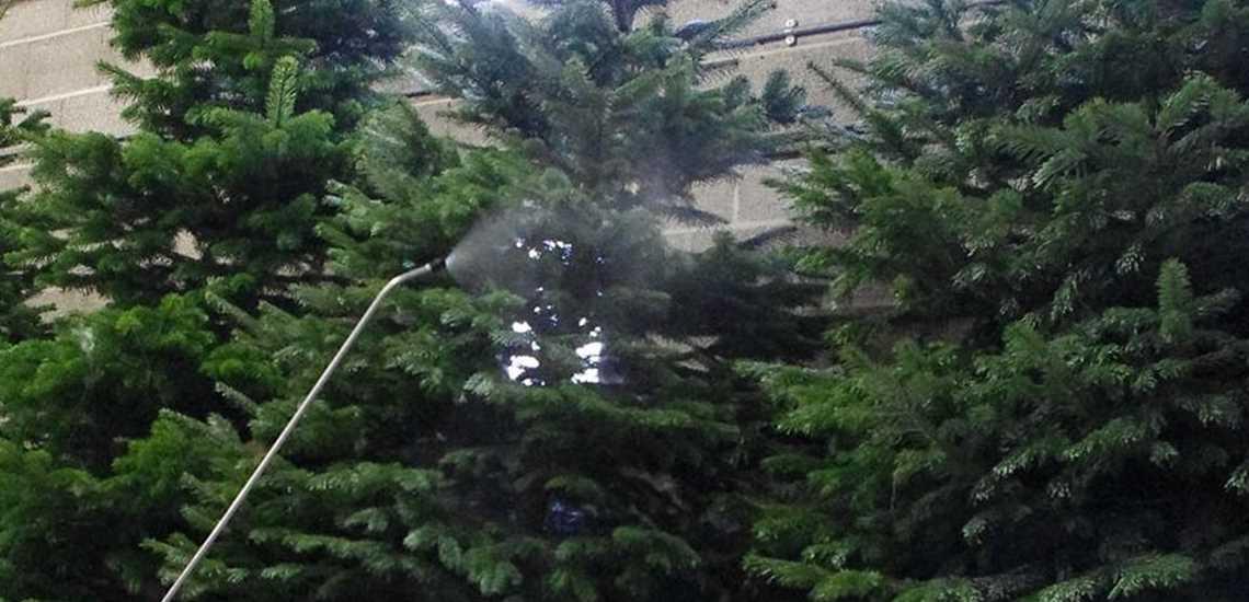 Kerstboom Impregneren Royal Safety